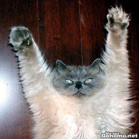 Un chat qui avec une bonne tete de psychopathe essaye de faire peur ...
