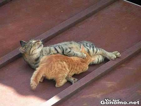 Des chats qui se font plaisir ! Miaouuuuuuuuuu !