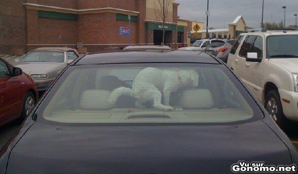 Pour ceux qui enferment leurs chiens dans leurs voitures voila quelque chose de dissuasif !