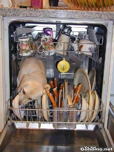 Un chien a l interieur d un lave vaisselle leche les assiettes sales