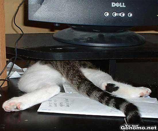 Les chats ont l art de se mettre dans des situations debiles