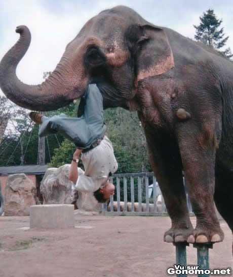 Numero acrobatique avec un elephant et un homme suspendu la tete en bas