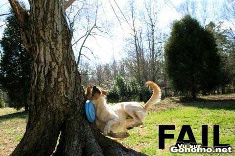 Fail ! Un chien s ecrase contre un arbre en voulant rattraper frisbee