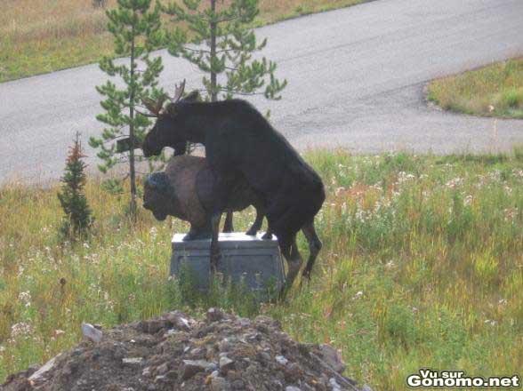 Un renne qui se soulage avec une statue lol