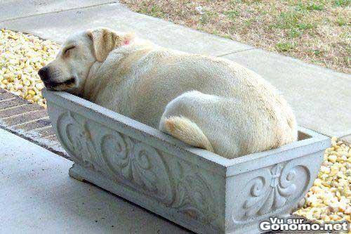 Grosse sieste dans un bac a fleur pour ce chien