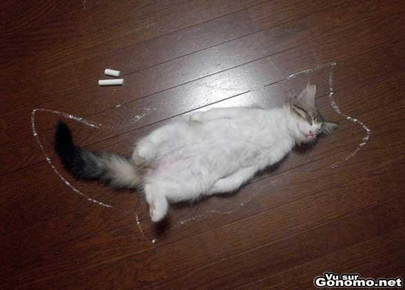 Killcat ! Sur les lieux du crime d un petit chat ...
