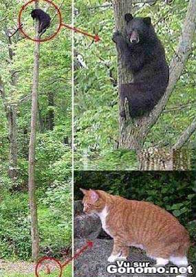 Un chat fait peur a un ours