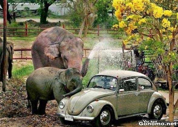 Les debuts de l Elephant Bleu :)