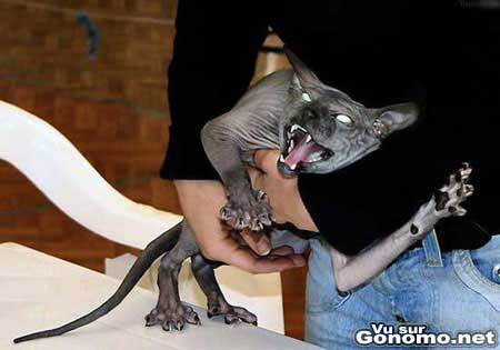 Un chat tres moche tout droit sorti d un film d horreur !
