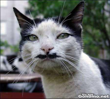 Un chat a moustache. Pas tres beau entre nous !