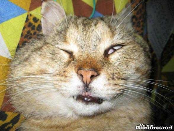La rage de dents chez les chats, ca existe ?