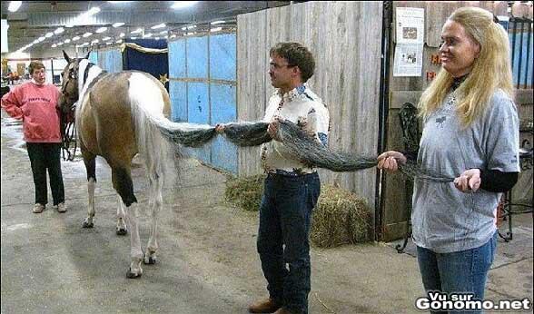 Une queue de cheval qui doit trainer par terre