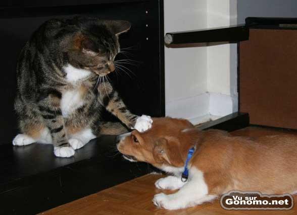Ici c est le chat qui fait la loi. Respect !