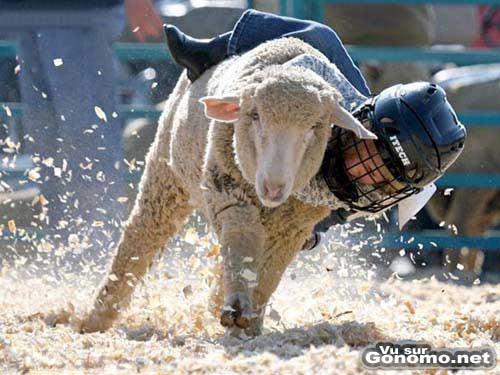 Un rodeo pour enfants avec des moutons en guise de monture