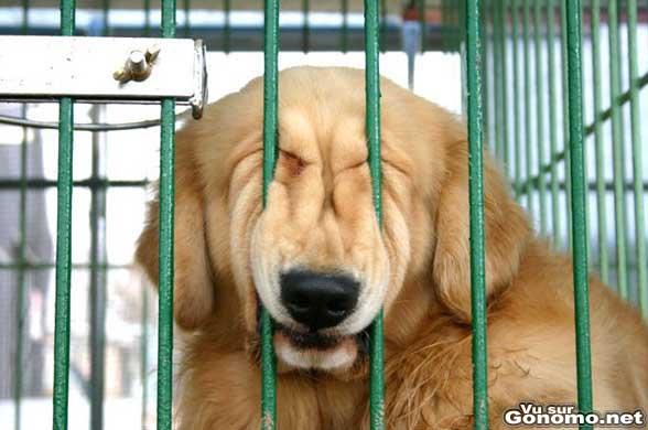 Belle grimace pour ce chien