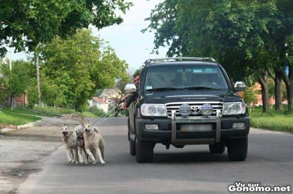 Des chiens de traineau pour tracter son 4X4