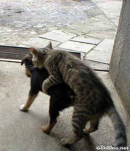 Ils sont intenables ces chats en chaleur !