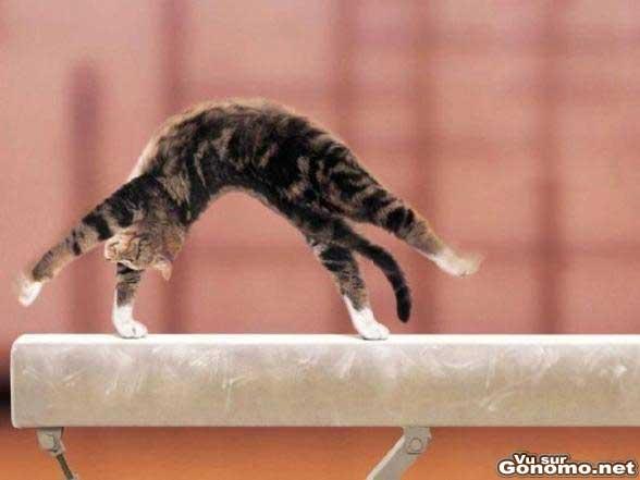 Les chats sont vraiment tres forts