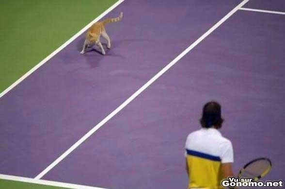 Un chat qui s invite sur un cours de tennis