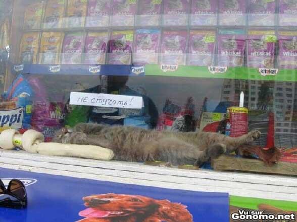Un chat qui fait tranquillement la sieste dans un vitrine