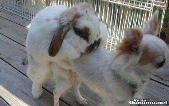 Ils niquent tout ce qui bouge ces lapins !