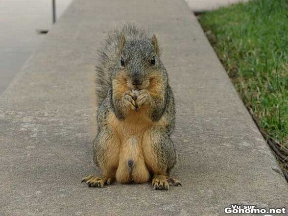 Un ecureuil severement burne !