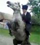 Ce cheval est bien decide a ne pas se laisser faire !