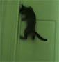 Le proprietaire de ce chat va avoir du mal a lui interdire l acces a sa chambre