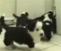 Chat harcele par des chiens qui se multiplient. Ca vous dit quelque chose ?