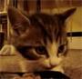 Deux adorables petits chatons en train de manger. Yum yum yum ...