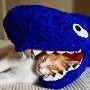 Un chat en train de dormir dans la tete d un requin :p