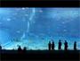 L aquarium geant d Okinawa au Japon. Simplement magnifique !