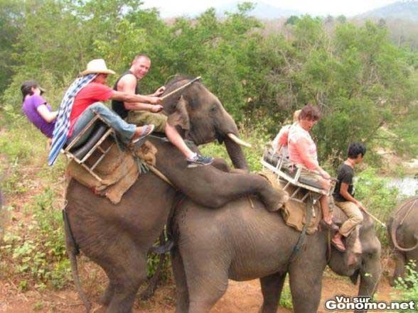 Une balade en elephant tres hot !