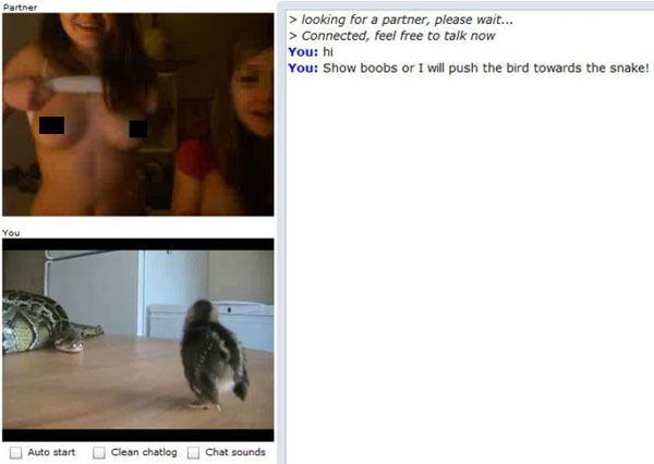 chat-roulette-fun-un-autre-screenshot-amusant-de-chatroulette-qui ...