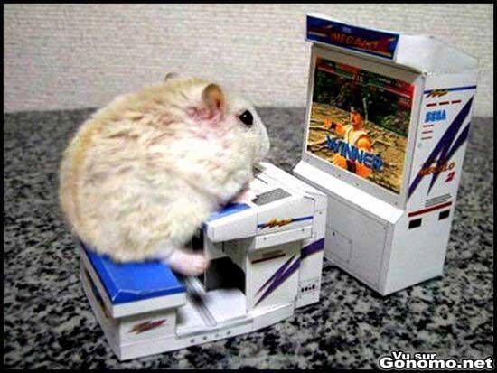 Un hamster en train de jouer a un jeu de combat sur une borne d arcade a sa taille