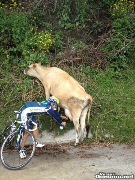 Ravitaillement naturel pour ce cycliste qui remplit sa gourde de lait en trayant une vache