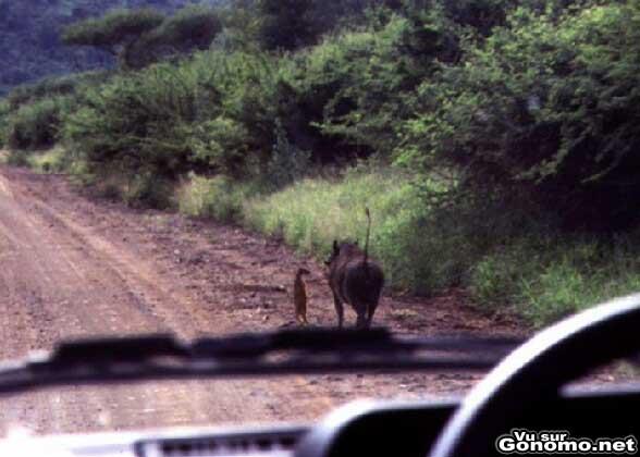 Timon et Pumbaa du Roi Lion en vrai :)