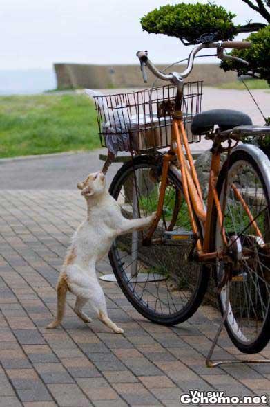 Un chat qui fait ses courses