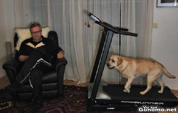au lieu de sortir chien il l attache sur un tapis de course p un papy en de lire