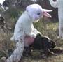 Remi Gaillard et la vengeance des lapins ! Messieurs les chasseurs vous etes prevenus ...