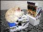 Un hamster en train de jouer a un jeu de combat sur une petite borne d arcade