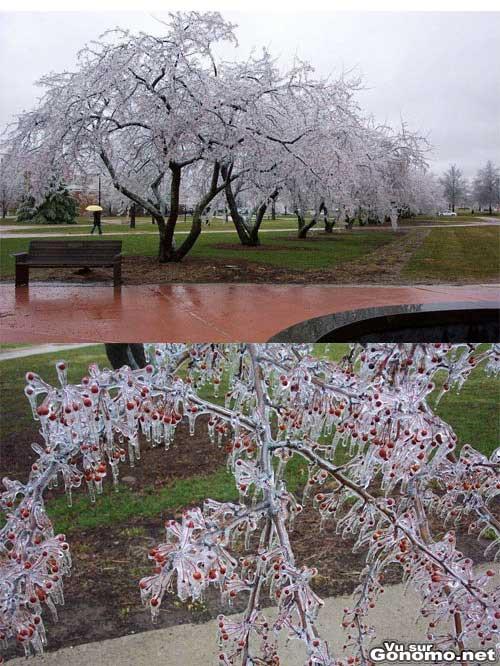 Un arbre qui aver le froid a completement gele jusqu au bout des branches