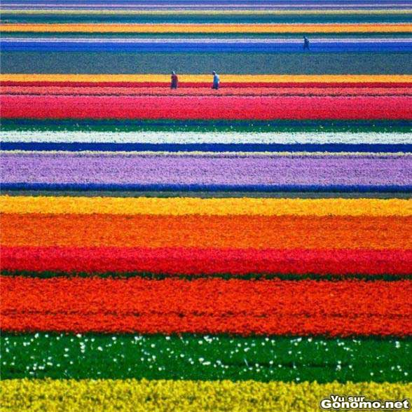 Un champ de fleurs multicolores