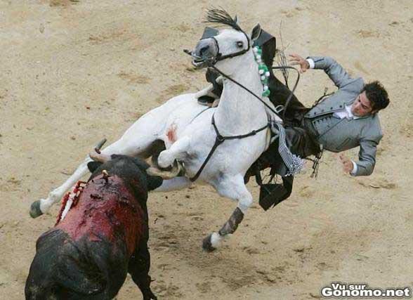 Dommage qu il y ai que le cheval qui ramasse !