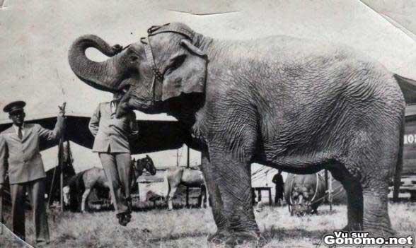 cirque un courageux volontaire met sa tete dans la bouche d un elephant vieux numero de. Black Bedroom Furniture Sets. Home Design Ideas