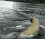 Il se fait piquer son poisson par un enorme lion des mer !
