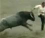 Des toreadors empales par des taureau ! Ole !