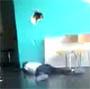 Un mec tente un Backflip. Il se casse la gueule et explose le mur :s