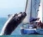 Bateau vs baleine : il y a de la place pour tout le monde en mer et pourtant ca peut arriver !