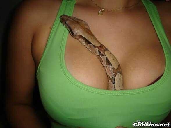 Un serpent bien au chaud entre les nichons de sa maitresse :p